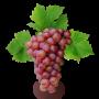 Саженцы Винограда в Стерлитамаке в ассортименте
