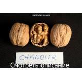 Грецкий орех Chandler